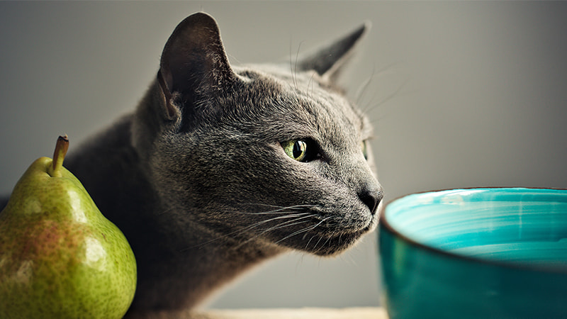 grey cat looking at green bowl and a green pair