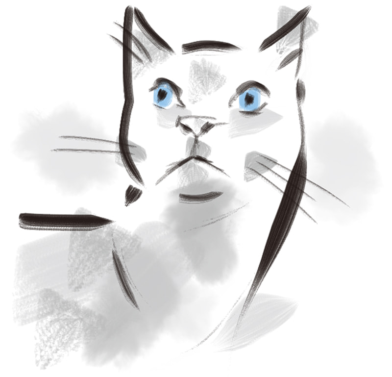 sketch of a cat looking up