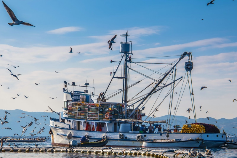 large docked fishing boat with seaguls in air