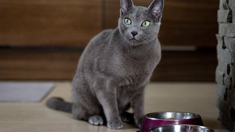cat with bowl
